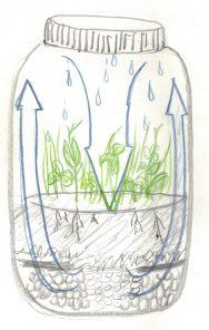 DIY Terrarium Jar Eco-System Diagram