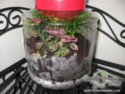 DIY Terrarium in Upcycled Container