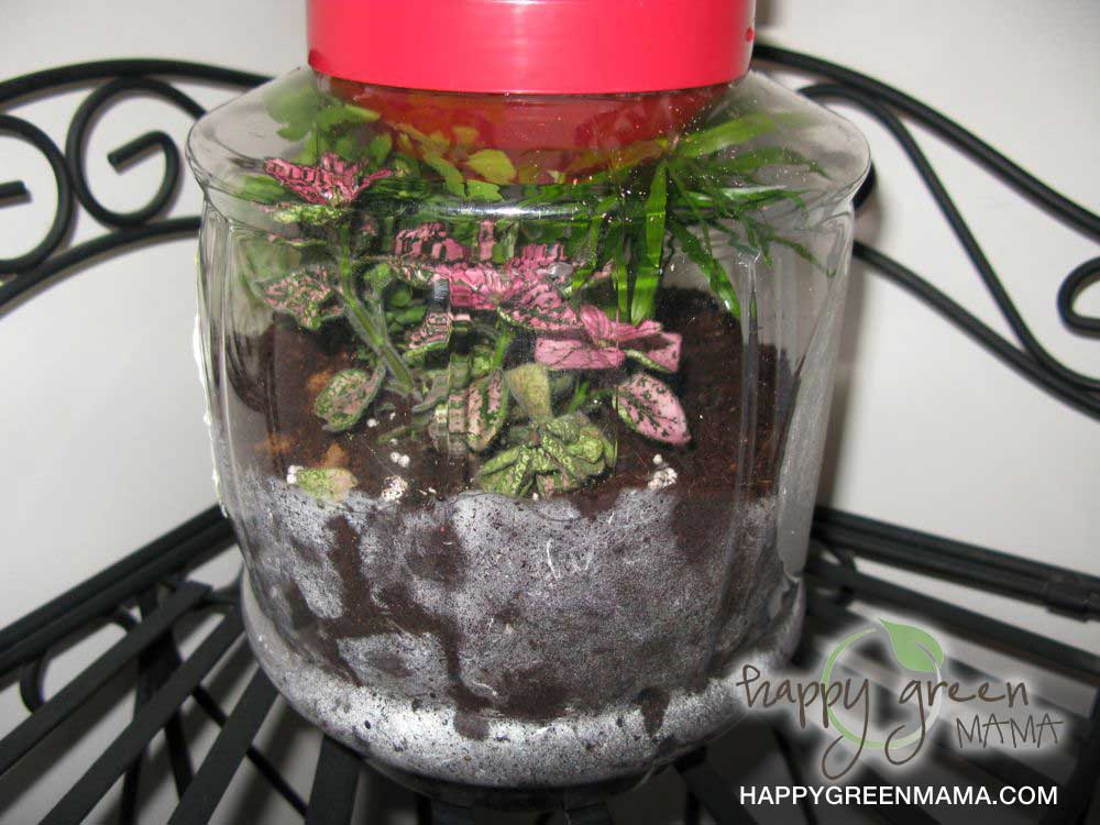 diy terrariums green crafts for kids learning about eco systems. Black Bedroom Furniture Sets. Home Design Ideas