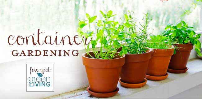 Container Gardening: Growing plants and herbs in pots - Five Spot Green Living