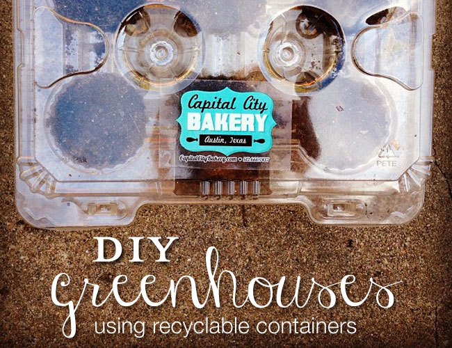 DIY Greenhouse: Homemade Mini Containers for Seeds