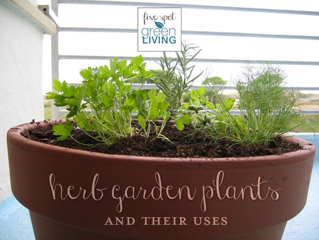 Herb Garden Plants and Their Uses