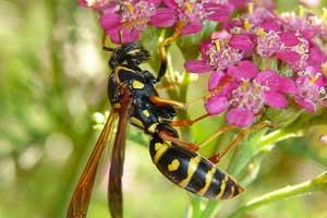 Wasp Repellent Ideas