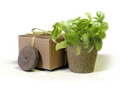 Eco-Friendly Herbs in a Box Basil Favor