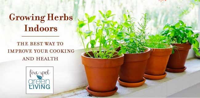 Growing Herbs Indoors The Best Way to Improve Your Cooking. Best Indoor Herbs