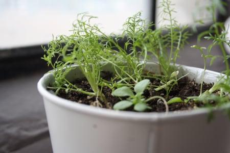 Botanical PaperWorks Plantable Paper