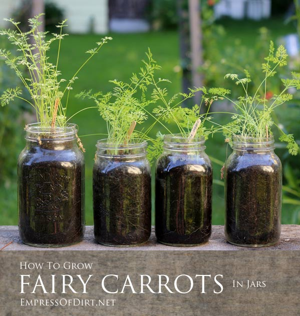 Fairy-Carrots-In-Jars-2c Container Gardening with Kids