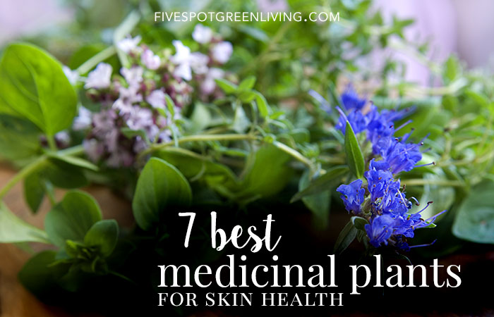 Medicinal Plants: 7 Best Plants to Grow for Skin Health