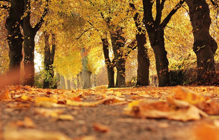 take a walk in the fall foliage