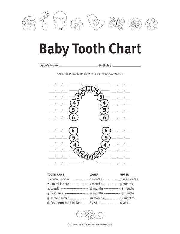 baby teething schedule tooth chart printable