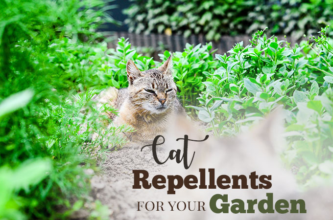 Best Cat Repellent Plants and Natural Deterrents for Your Garden