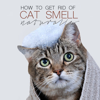 getting rid of cat spray smell in carpet