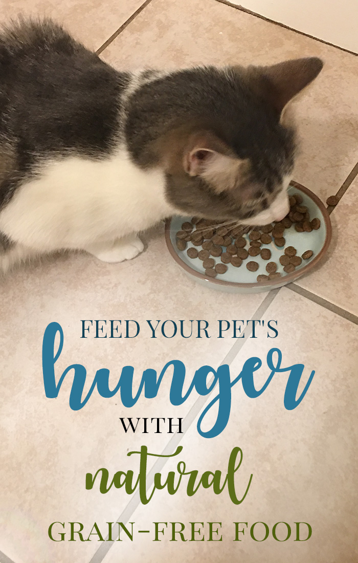 Feed Your Pet's Hunger with Natural Grain-Free Food from UNTAMED by 4health