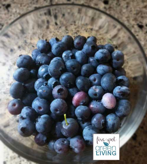 blog-food-blueberries-bowl-fsgl Container Gardening with Kids