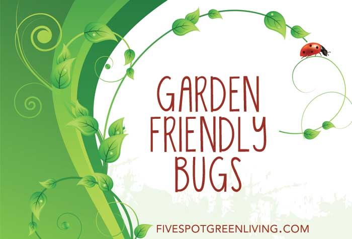 Garden Friendly Critters to Tell Your Kids About
