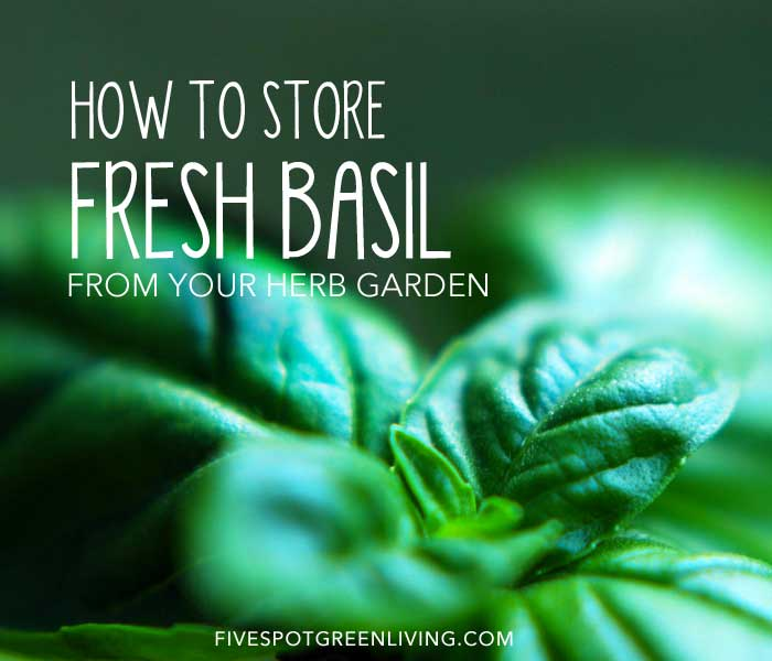 How to Store Fresh Basil from Your Herb Garden FiveSpotGreenLiving.com