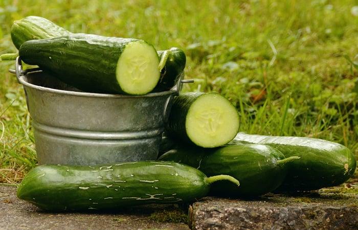 Cucumbers for Beginner Gardeners