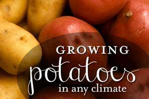 blog-gardening-potatoes-300px Container Gardening