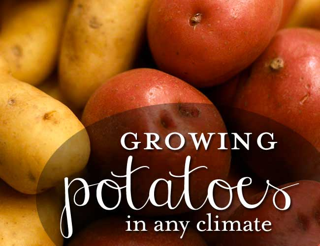 blog-gardening-potatoes-500px Container Gardening with Kids