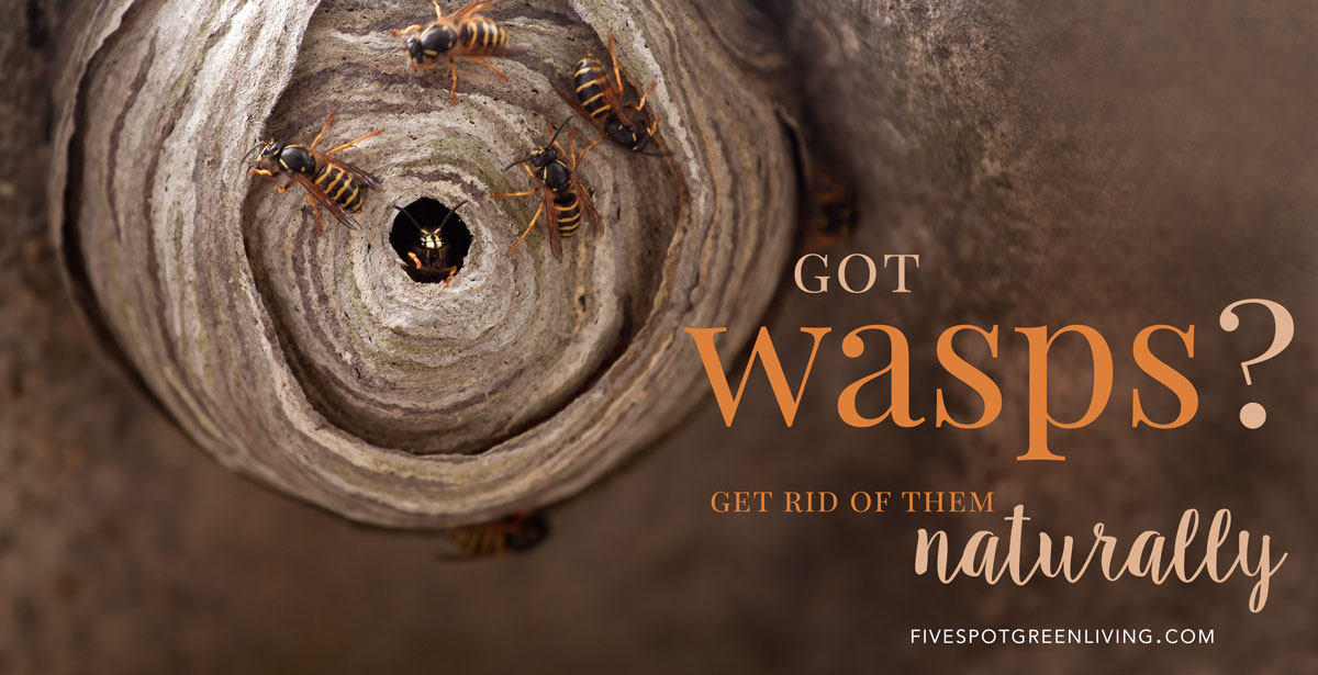Get rid of wasps naturally