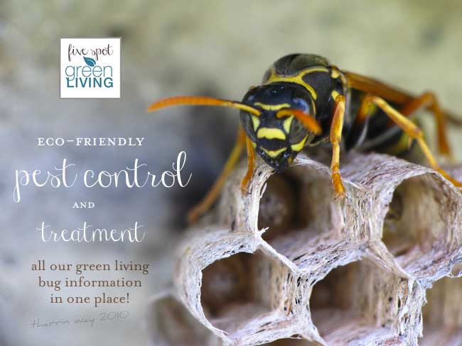Natural Pest Control – Repellents and Treatment