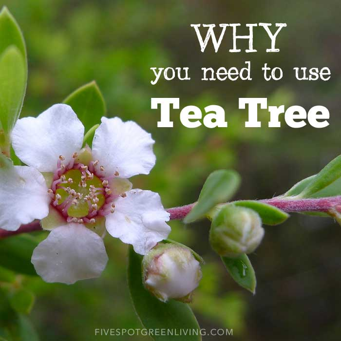 blog-health-why-use-tea-tree-landing-2-2 Tea Tree Oil for Cuts and Scrapes