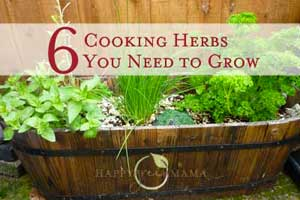blog-herbs-cooking-300px Container Gardening