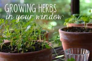 blog-herbs-kitchen-window-300px Container Gardening