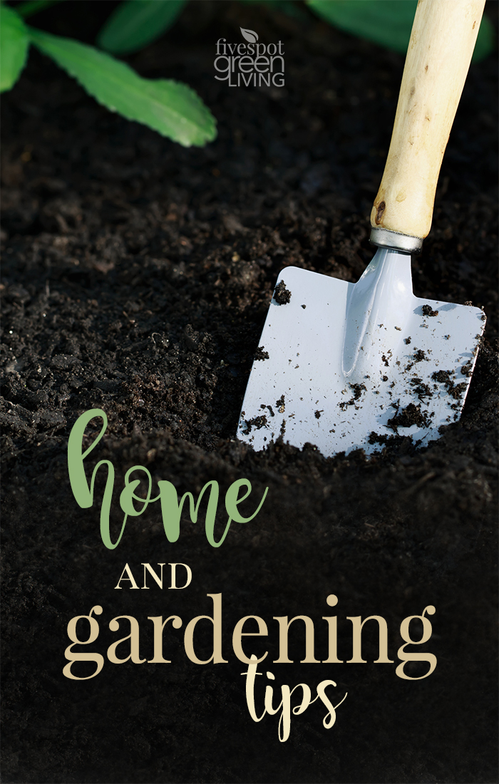 Home and Gardening Tips to get immersed in the outdoors even when you don't have a green thumb!