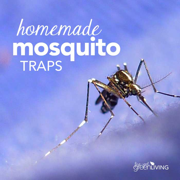 Easy Eco-Friendly Mosquito Traps - Five Spot Green Living