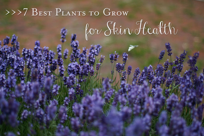 Top 20 Health, Nutrition and Natural Living Posts of 2014 on Five Spot Green Living
