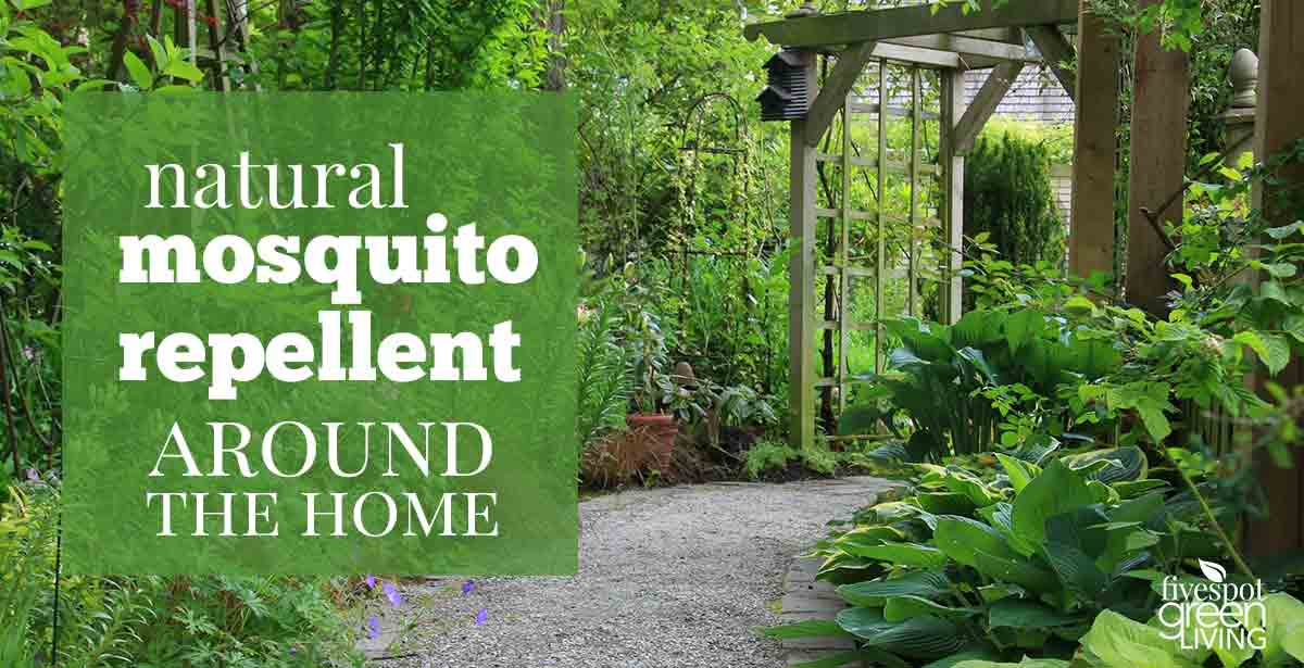 Natural Mosquito Repellent Using Plants and Natural Items