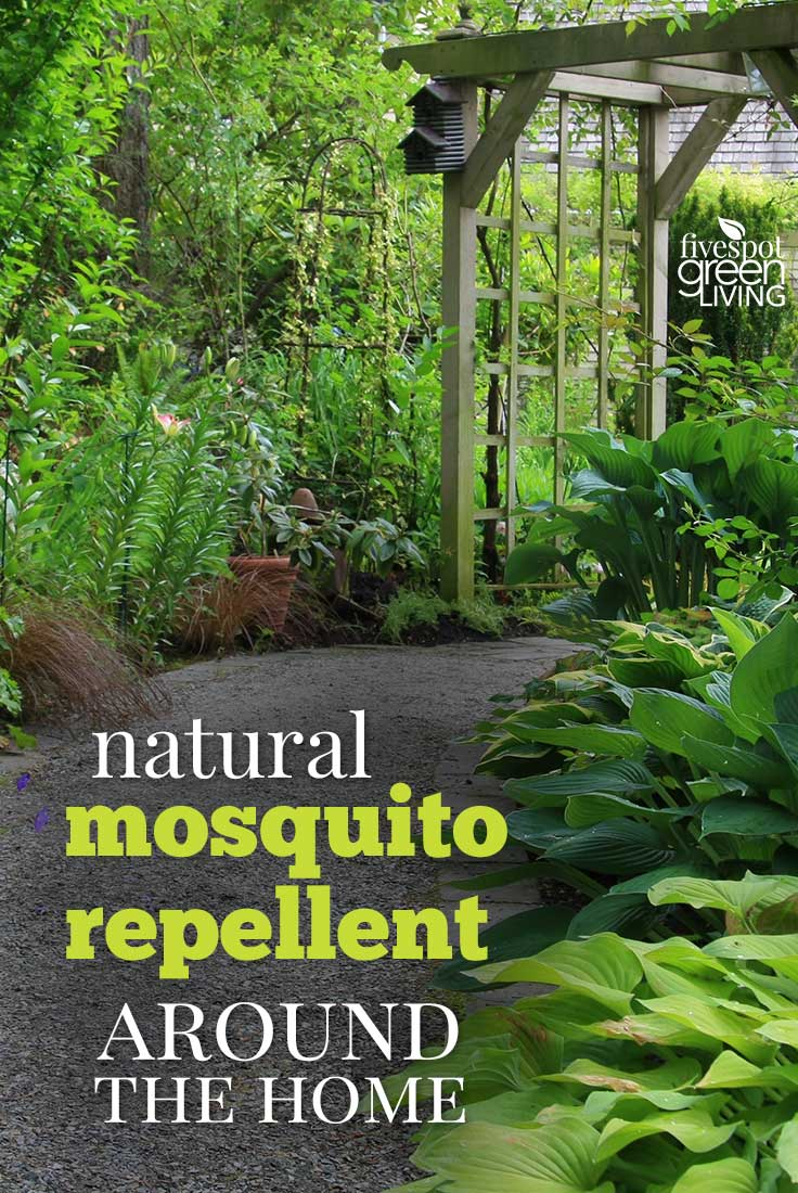 Natural Mosquito Repellent Around the Home