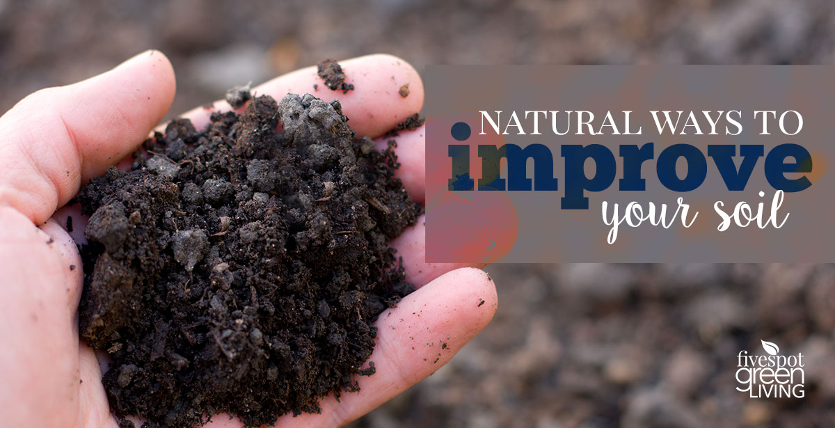 Natural Ways to Improve Your Soil using plants and insects