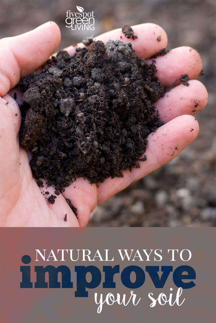 Natural Ways to Improve Your Soil