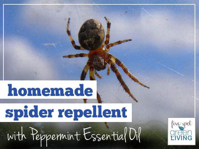 Homemade Spider Repellent with Peppermint Essential Oil
