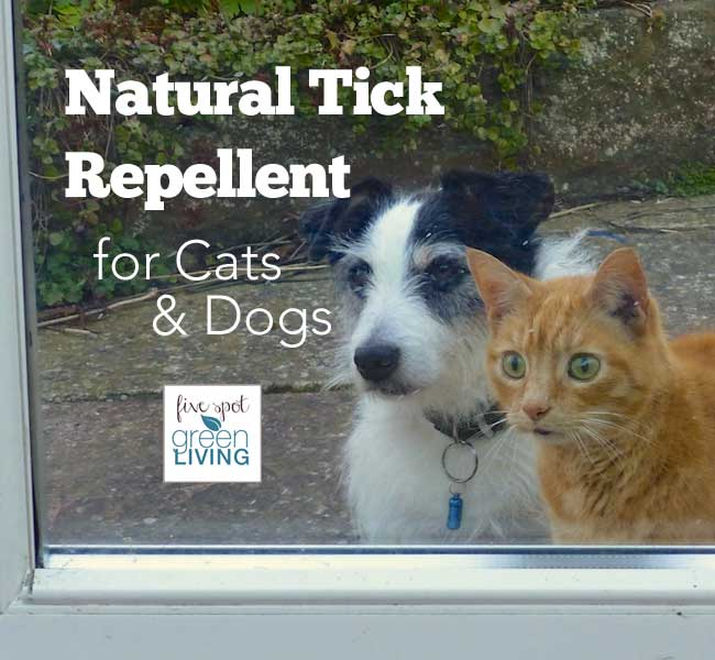 Natural Tick Repellent for Cats and Dogs
