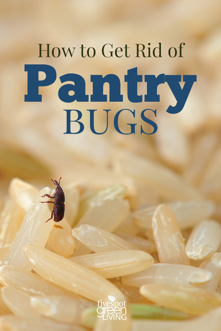 How to Get Rid of Pantry Bugs - Five Spot Green Living