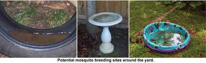 standing water sources