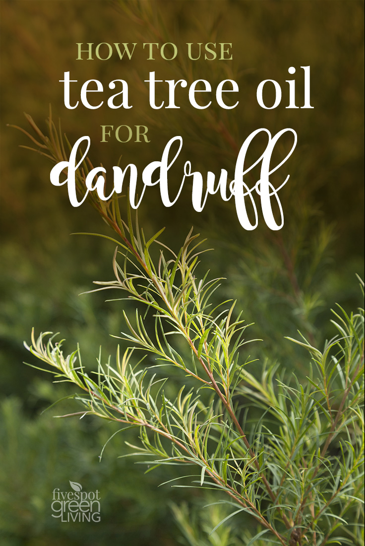 How to Use Tea Tree Oil for Dandruff