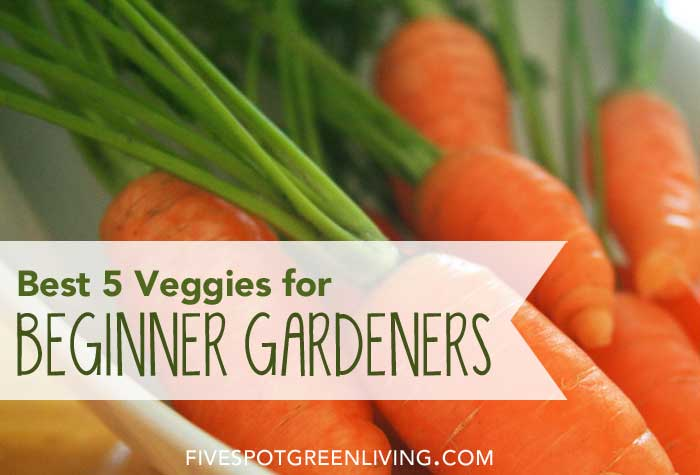 Best 5 Veggies for Beginner Gardeners FiveSpotGreenLiving.com