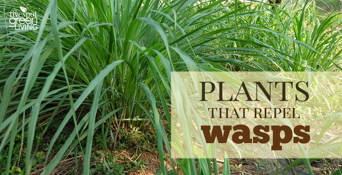 The Best Plants to Repel Wasps