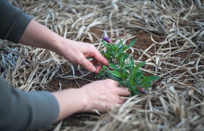 planting a garden spring activity
