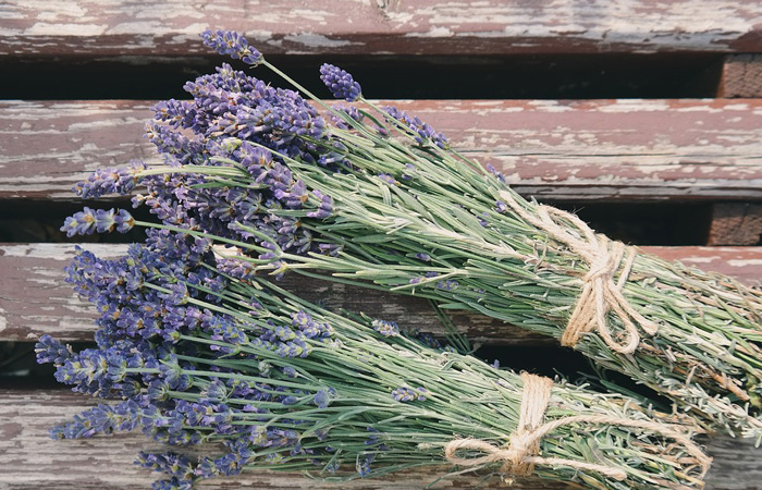 lavender for flea and tick repellent