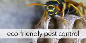 Natural Pest Control, Repellents and Treatment