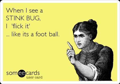 stink bug funny