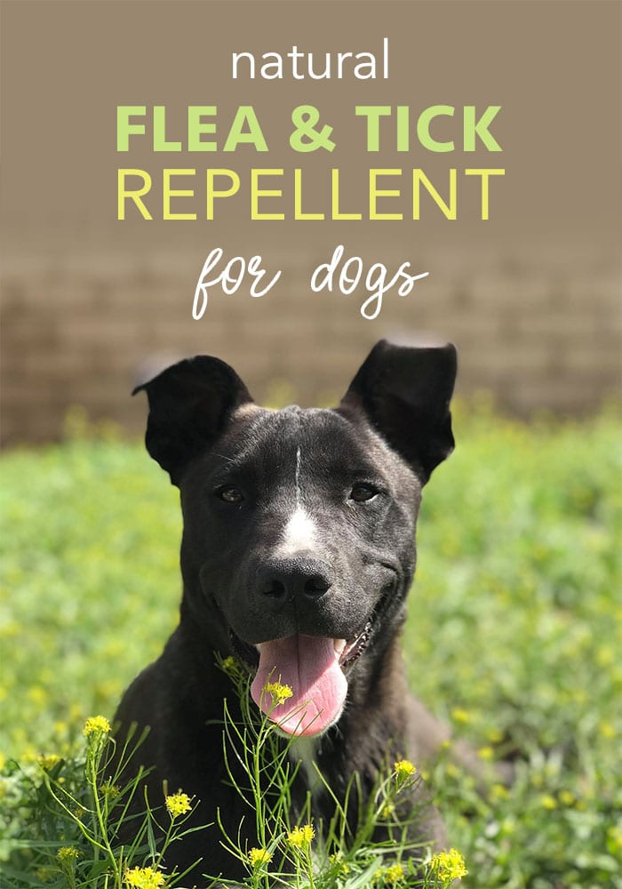DIY Natural Tick Repellent for Dogs