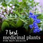 7 Best Plants for Skin Health