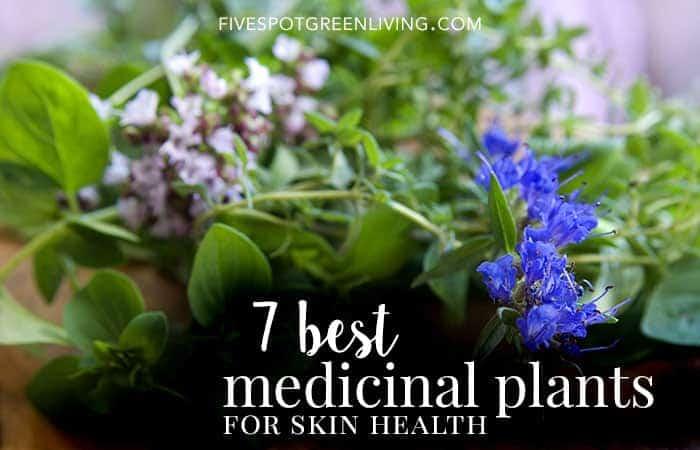 best medicinal plants