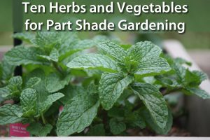 rp_Herbs-and-Vegetables-for-Part-Shade-Gardening.jpg